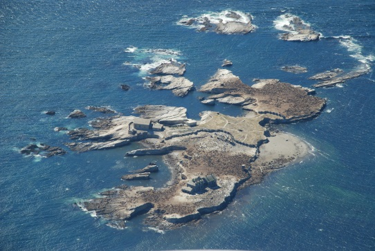 Photo by M. Maheigan, marine mammal colony from the air on an AuxAir patrol