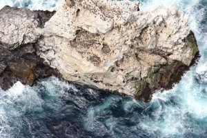 Seabird breeding colony from the air, USFWS